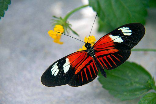 Butterfly, Nature, Orange, Insect, Flower, Colorful