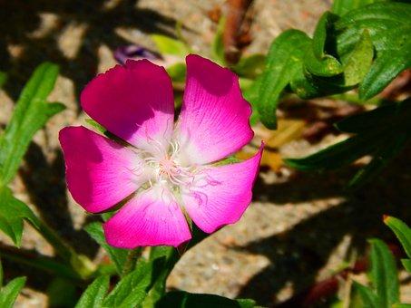 Flower, Wildflower, Bloom, Botanical, Wildflowers