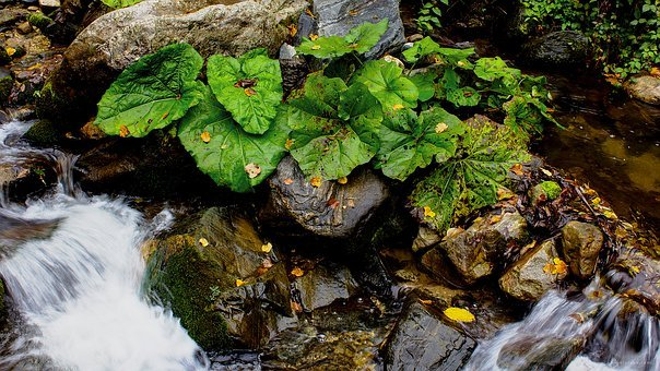 Forest River Stream, Picture Of Green River Plants