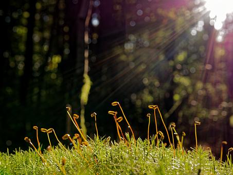 Moss, Sun, Forest, Nature, Green, Light, Sunlight