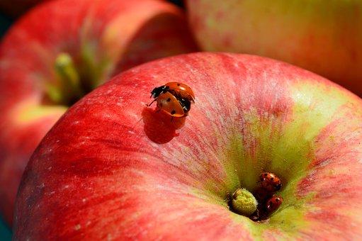 Apple, Ladybug, Fruit, Close Up