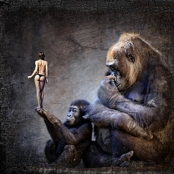 Cd Cover, Gorilla, Monkey, Woman, Naked, Funny, Curious