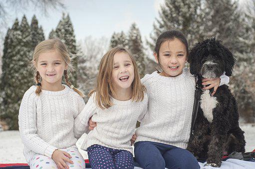 Sisters, Dog, Snow, Bernadoodle, Pets, Fur, Animal
