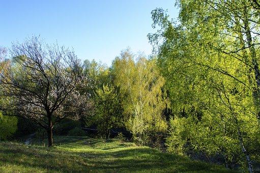 Forest, Spring, Forests, Nature, Green, Wood, Landscape
