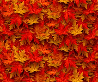 Autumn, Case, Fall Leaves, Nature, Leaves, Colorful