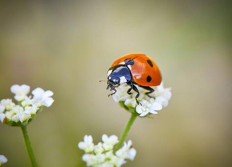 Macro, Wallpaper, Ladybug, Yeşil, Insect