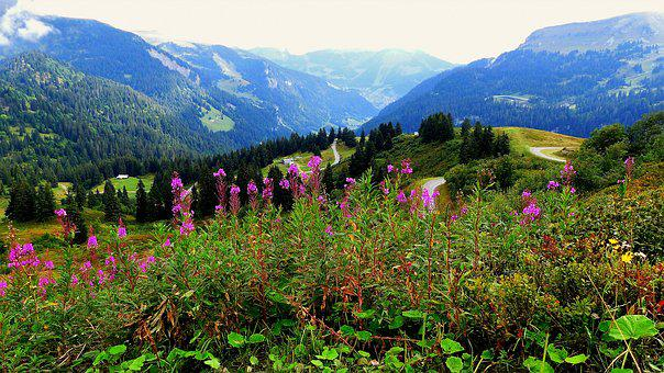 Nature, Landscape, Alps, Flowers, Mountains, Mist