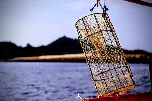 Nassa, Sea, Fishing, Nasse, Porto