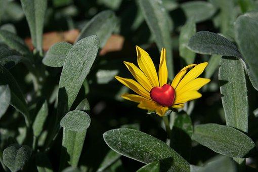 Flower, Petals, Nature, Bloom, Plant, Summer, Floral