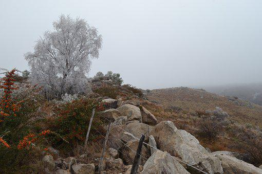 Landscape, Frost, Winter, Cold, Nature, White, Trees