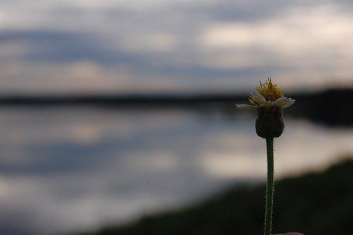 Flower, Lake, Nature, Bug, Green
