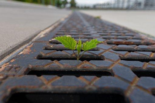Plant, Green, Leaf, Nature, Leaves, Macro, Mood, Live