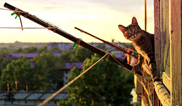 Cat, Paws, Balcony, City, Sunset