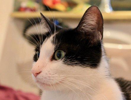 Cat, Animal, Pet, Black And White, Black White, Cute