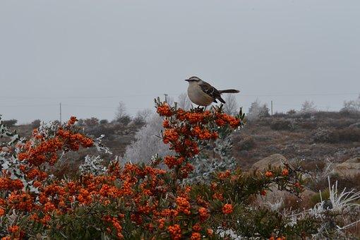 Bird, Birds, Ave, Nature, Animals, Fauna, Photography