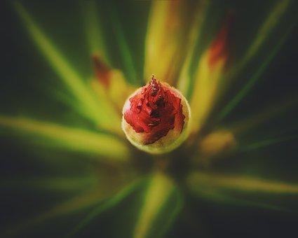 Nature, Plant, Flower, Animal, Spring, Blossom, Blue