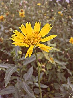 Nature, Beauty, Flower, Leaf, Plant, Bloom, Sunrise