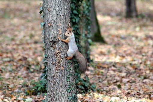 Squirrel, Trunk, Nature, Tree, Park, Outdoors, Autumn