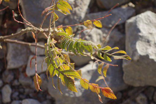 Plant, Rockery, Fall, Colorful, Green, Yellow, Red