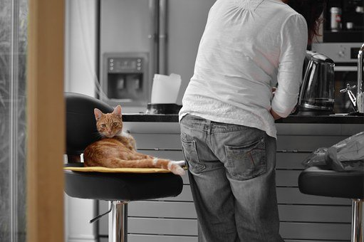 Ginger, Cat, Kitchen, White, Tabby, Stool, Eating
