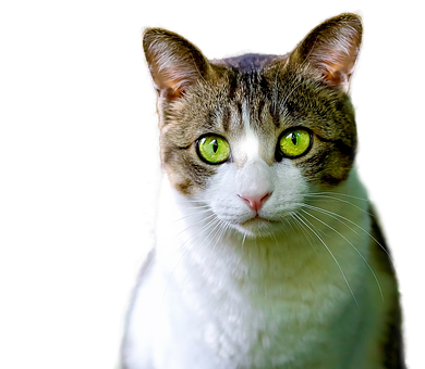 Cat, Isolated, Feline, Render, Png, Pet, Animal, Gata