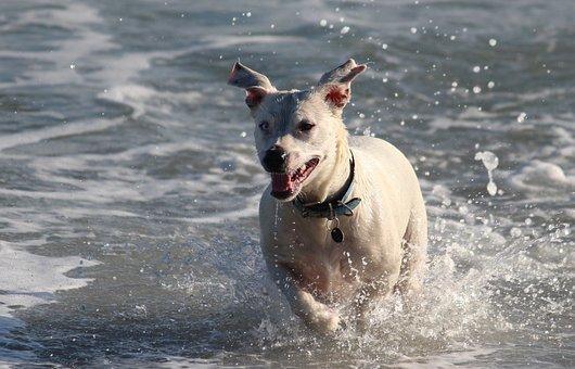 Dog, Water, Sea, Wave, Beach, Fun, Water Dog, Play