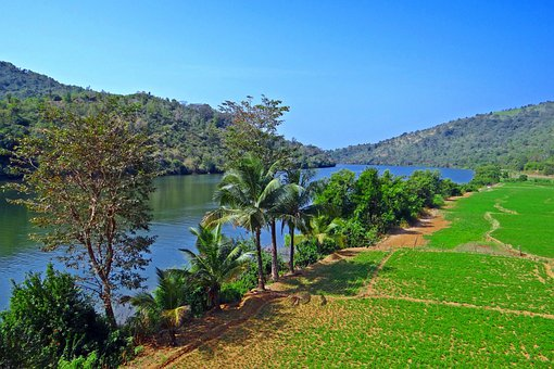 Gangavali River, Tidal Swell, Groundnut Crop