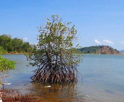 Mangroves, Tidal Forest, Creek, Arabian Sea