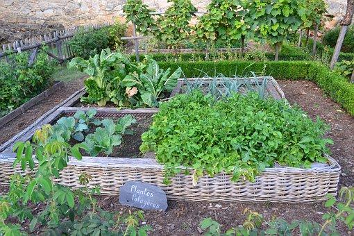 Vegetable Garden, Medieval Garden