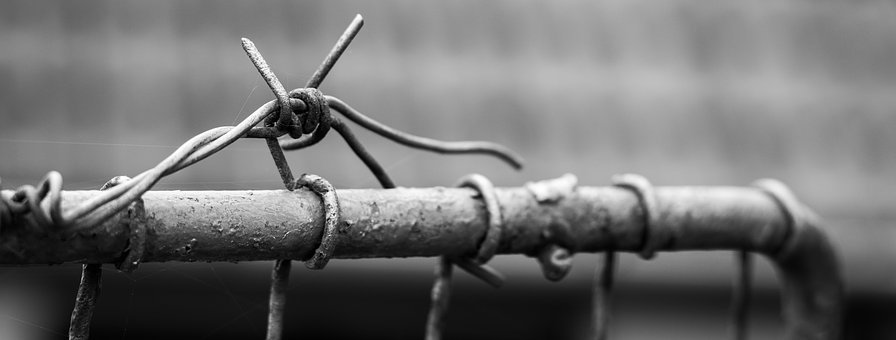 Barbed Wire, Wire, Fencing, Defense, Fence, Metal