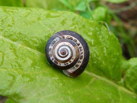 Snail, Leaf, Chard, Moisture