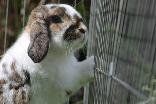 Rabbit, Cute, Get Me Out, Fence, Prison, Cage, Animals