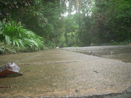 Road, Peradeniya Garden, From Bottom, Long Distance