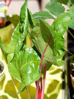 Chard, Vegetables, Vegetable Plant, Market