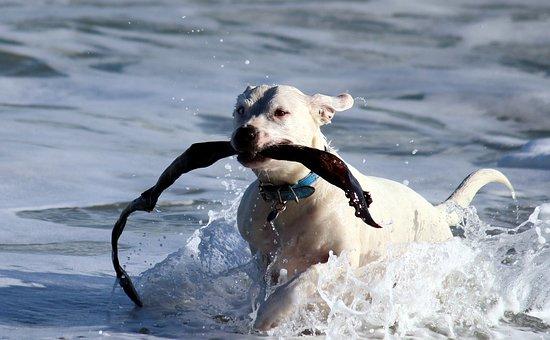 Dog, Water, Play, Beach, Sea, Lake, Water Dog, Fun