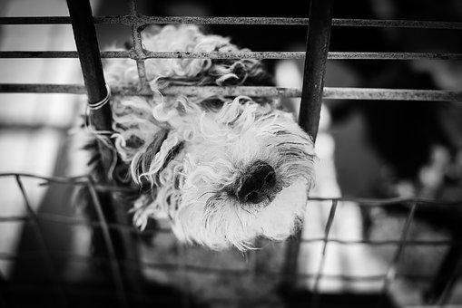 Dog, Animal, White, Animals, Cage, Prison, Pet, Sad
