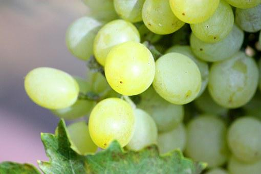Grapes, Bunch, White, Fruit, Vine, Food, Wine, Ripe