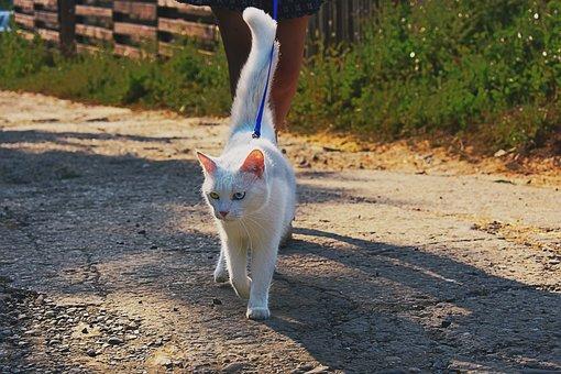 Cat, Walk, Park, Outside, Pet, Animal, Cute, Nature