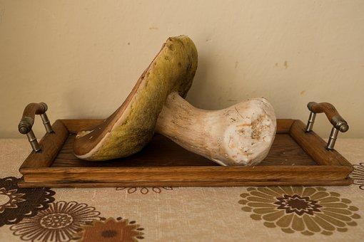 Mushrooms, Show, Autumn, Coaster