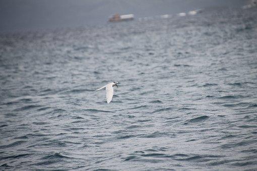 Bird, Kingfisher, Ocean, Boracay, Bird Flying