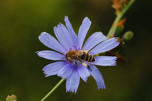 Bee, Blossom, Bloom, Collect, Sprinkle, Insect, Pollen