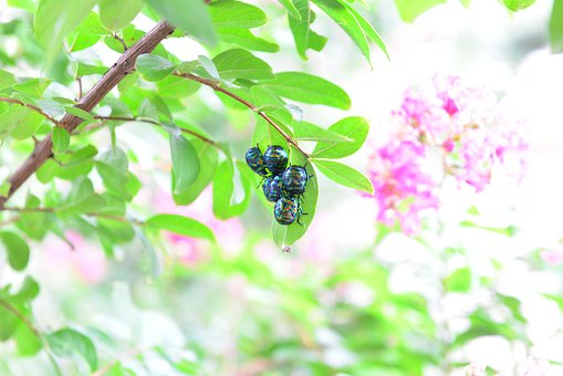 Insects, Bug, The Leaves, Summer, Mating