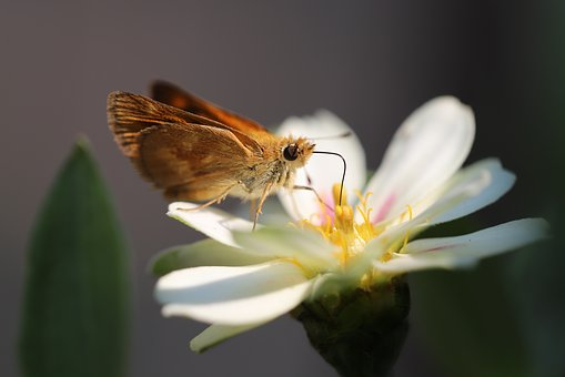 Butterfly, Nature, Insect, Bloom, Animal, Blossom