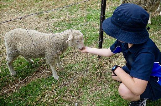 Sheep, Child, Feeding, Sweet, Cute, Lamb, Nature