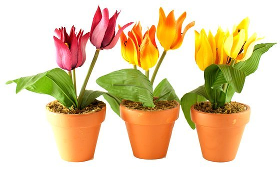 Flowers, Flower Pot, Flower Shop, Garden, Decoration