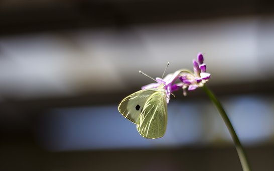 Butterfly, Animals, Insects, Flower, Nature, Fauna