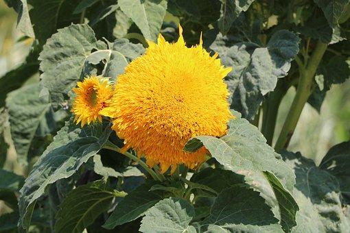Flower, Nature, Park, Color, Garden, Flora, Petal