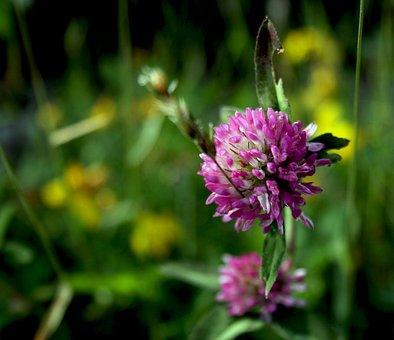 Wild Flower, Flower, Nature, Bloom, Flora, Summer