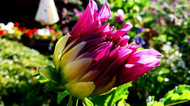 Flower, Violet, Pretty, Nature, Plants