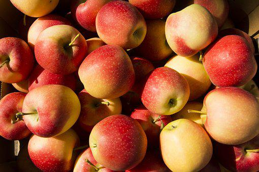 Fruit, Apple, Apples, Agriculture